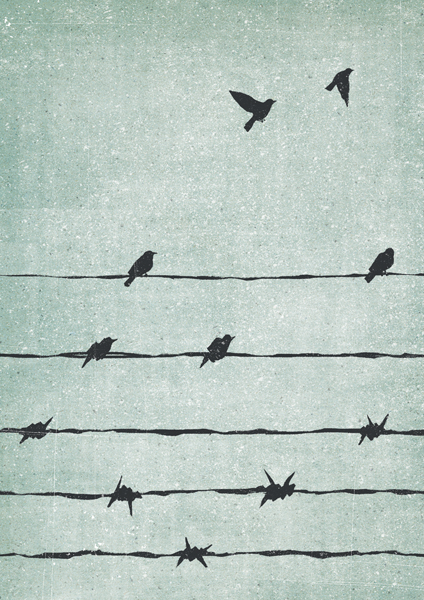 Freedom ©Davide Bonazzi