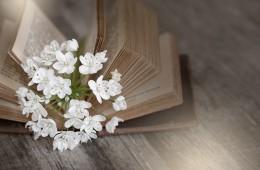 book-1356337_960_720