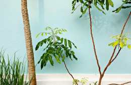 Arredo piante: la scelta giusta per ogni ambiente