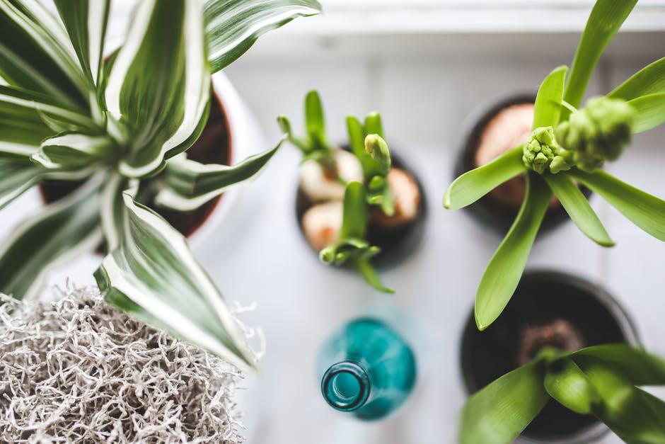 Differenti formati di vasi e tipologie di piante, bulbi e composizione con bottiglie ed oggetti colorati